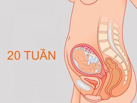 thai nhi 20 tuần tuổi đạp như thế nào