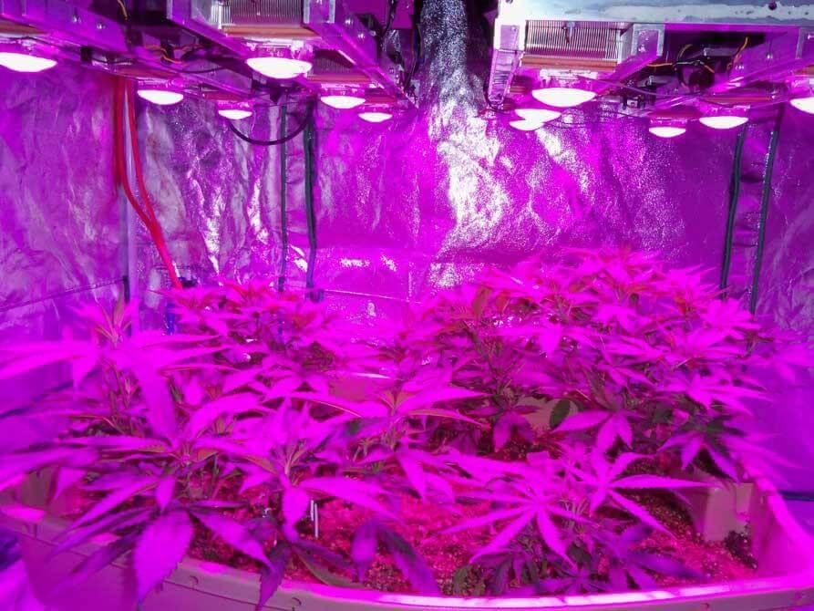 Đèn Led quang hợp trông cây nông nghiệp