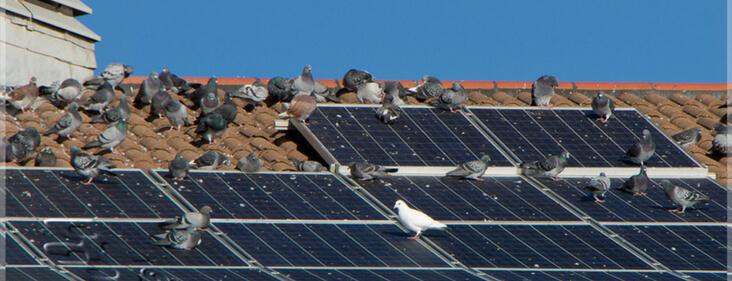 bảo trì và lau chùi tấm pin mặt trời