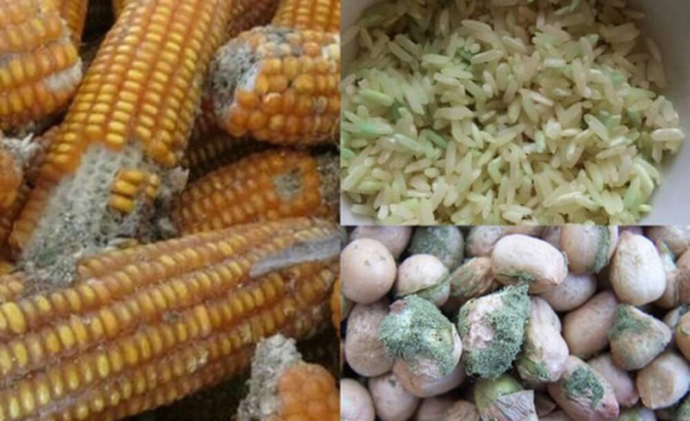 Các loại nấm mốc hiện nay